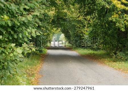 Beautiful road through the trees planted on roadsides - stock photo