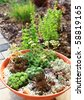 Beautiful rock garden cultivated in small basin or roof gardening - stock photo