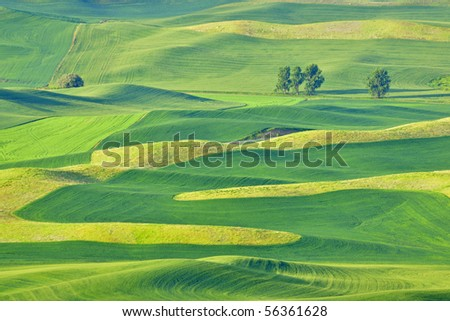 Beautiful rolling hills and patterns in the grain fields of the Palouse in Washington state, early summer.  The different shades are from the different crops of barley, wheat, and lentils.