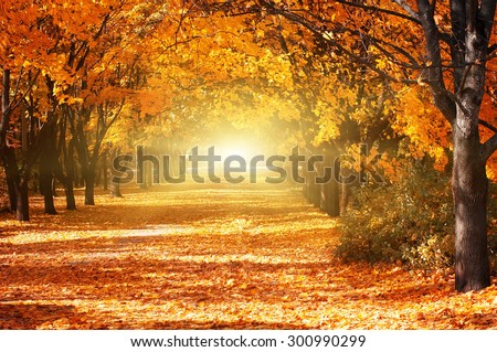 Beautiful romantic alley in a park with colorful trees and sunlight. autumn natural background - stock photo