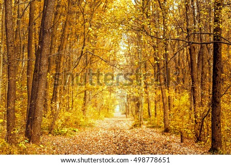 Beautiful romantic alley in a park with colorful trees and sunlight. autumn natural background. Fall season.
