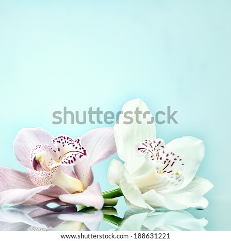 beautiful romantic orchid flower background - stock photo
