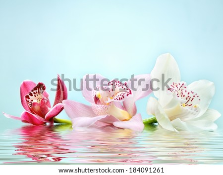 beautiful romantic orchid flower background reflected in water - stock photo