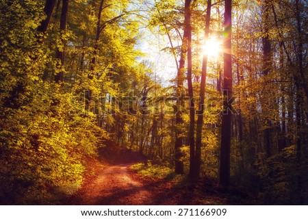 Beautiful romantic walk on a spring forest road in Black Forest, Germany, at sunset (diffused) - stock photo