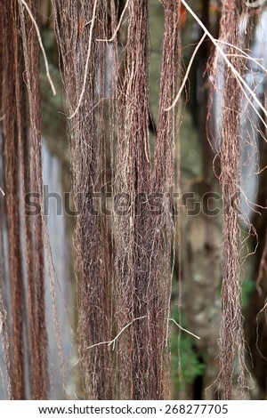 Beautiful roots and creepers plants photographed close-up - stock photo