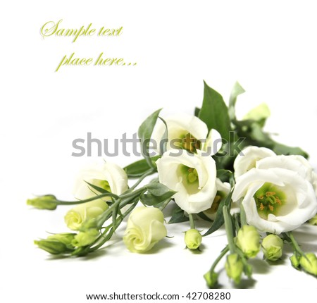 Beautiful rose (easy to remove the text) - stock photo