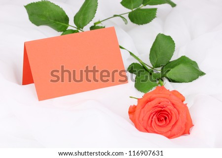 Beautiful rose on white cloth