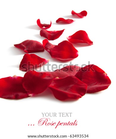 Beautiful rose petals isolated on white for your design - stock photo