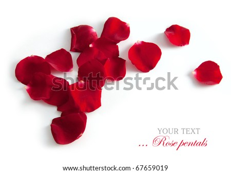 Beautiful rose petals isolated on white for your design