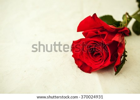 Beautiful rose with stem and leaves.