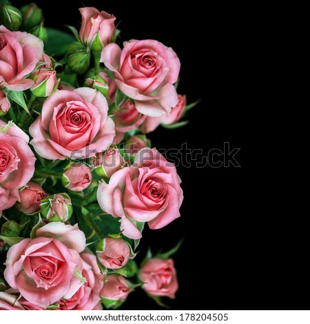 Beautiful Roses Bouquet Flowers Background - stock photo