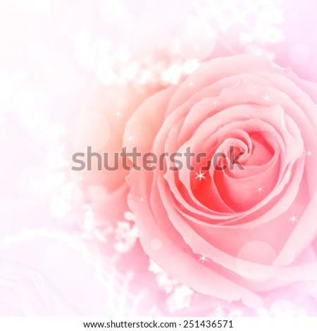 beautiful  roses flowers made with color filters - stock photo