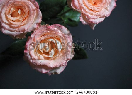 Beautiful roses for valentines day. Love concept for invitations, cards, tickets, congratulations  - stock photo