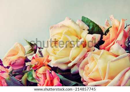 Beautiful Roses in soft retro style - stock photo