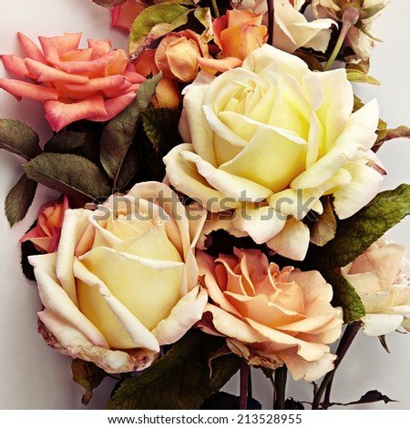 Beautiful Roses in soft vintage styled - stock photo