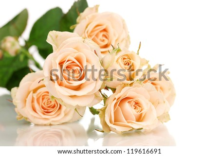 Beautiful roses isolated on white