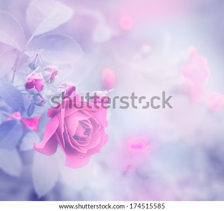 beautiful roses made with color filters/ Soft spring flower background - stock photo