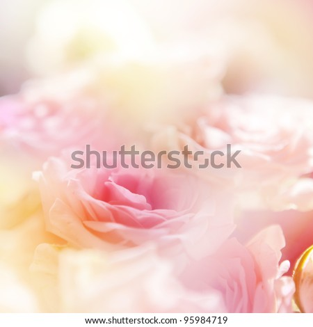 beautiful roses surrounded with other fowers. Made with color filters - stock photo