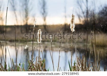 Beautiful rural landscape with lake, reeds and vegetation - stock photo