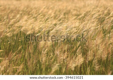 beautiful rural landscape with sunrise over a meadow - stock photo