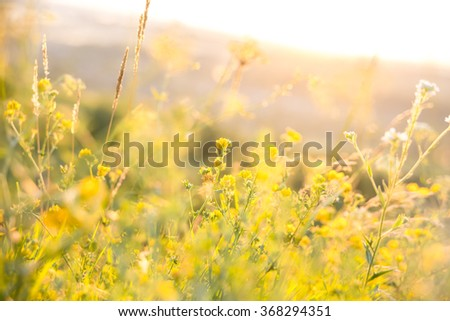 Beautiful rural landscape with sunrise over a meadow. Soft focus - stock photo