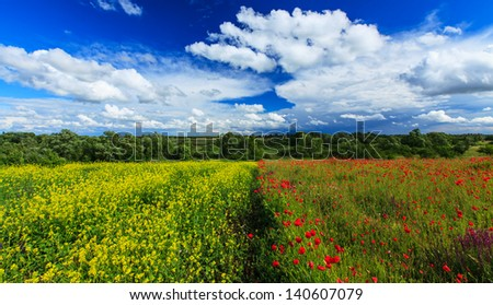 Beautiful rural meadow and field on a sunny day with scattered cumulus clouds