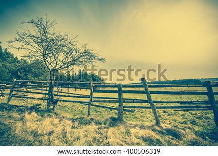 Beautiful rural scene with tree, forest, field and wooden fence, countryside landscape, pasture and meadow for grazing, vintage photo - stock photo