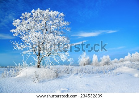 beautiful rural winter landscape with a one tree and the blue sky - stock photo