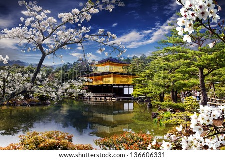 Beautiful sakura with nice gold temple - stock photo