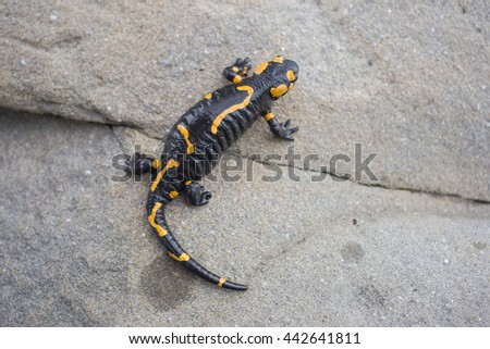 Beautiful salamander in a bright color in natural conditions in the summer. - stock photo