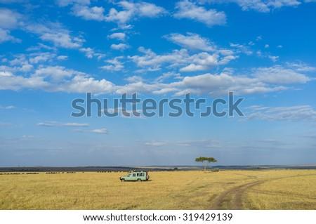 Beautiful savannah scene in Kenya, Africa - stock photo