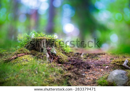 beautiful scandinavian forest with tree stump fungus, blueberry plants and magic blurred light in background - stock photo