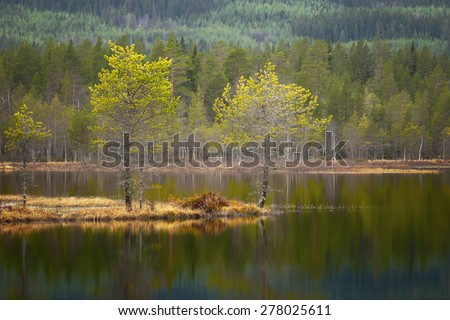 Beautiful Scandinavian landscape with small pine trees on island in tarn reflected in the water - stock photo