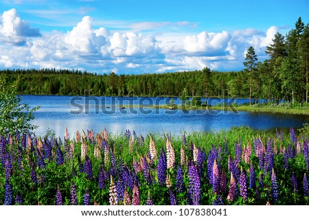 Beautiful Scandinavian summer landscape with lupines and lake - stock photo