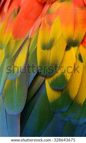 beautiful Scarlet Macaw (Ara macao) back feather