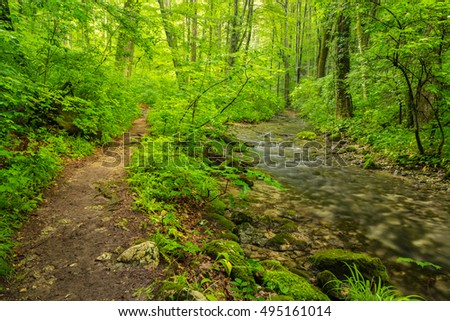 Beautiful Scenery In The Woods With Lush Green Foliage Spring