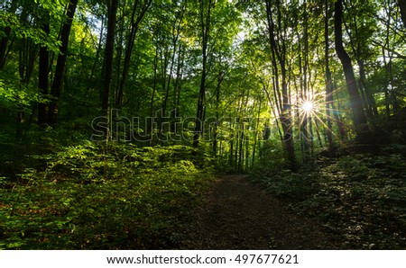 Beautiful scenery in the woods, with lush green foliage in spring