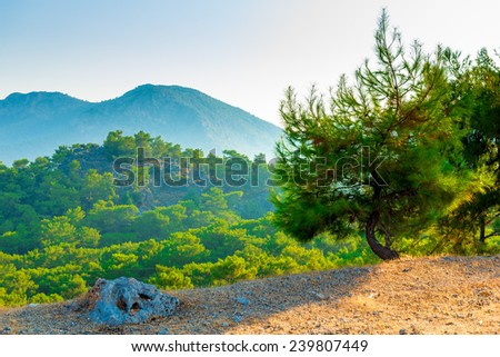 beautiful scenic mountains covered with pine forest - stock photo