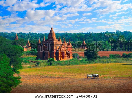 Beautiful scenic view - ancient Buddhist Temple against the background of fields, foliage, dramatic blue sky, and two feeding white bulls cart in the foreground, Bagan, Myanmar (Burma), Southeast Asia - stock photo