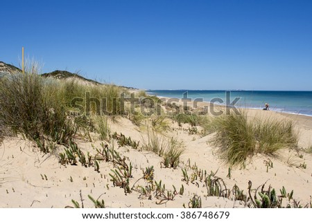 Beautiful scenic view of the sandy dunes  near the Indian Ocean at  isolated Buffalo Beach near Bunbury Western Australia on a calm  tranquil spring  morning.