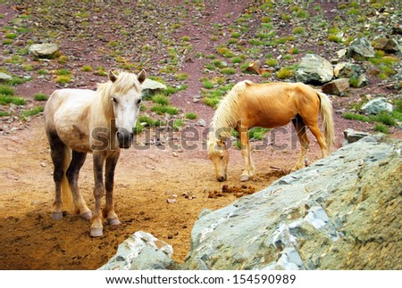 Beautiful scenic view with two beautiful domestic horses (white and yellow) free ranging on high mountain Himalaya plateau in Leh district, Ladakh, Jammu & Kashmir, Northern India, Central Asia - stock photo
