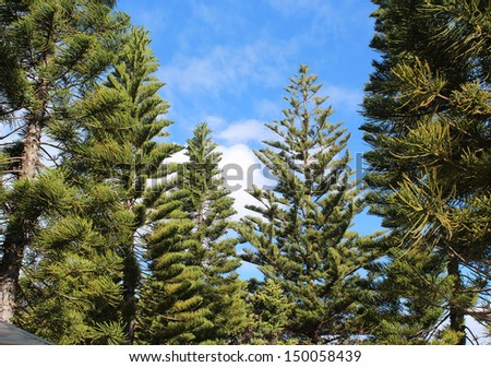 Beautiful scenic views of  pine trees at Geographe Bay Busselton western Australia from the cycleway   ensures a peaceful contemplative  ride on a cloudy afternoon in late winter - stock photo