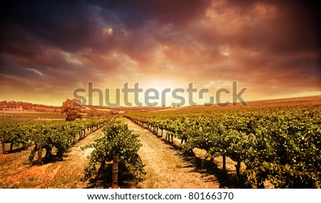 Beautiful scenic vineyard with stormy sunset sky - stock photo