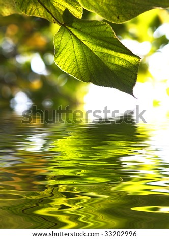 Beautiful scenics - green leaves reflection in water (shallow depth of field) - stock photo