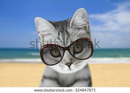 beautiful scottish kitten on the beach - stock photo