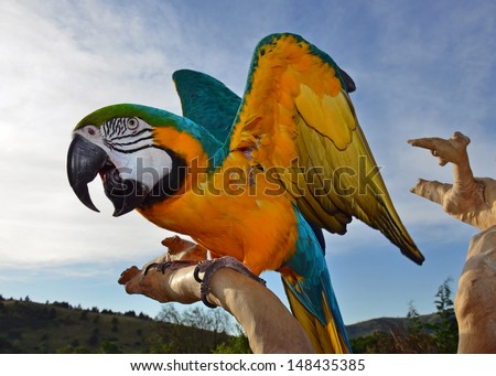 Beautiful Screaming Macaw - stock photo