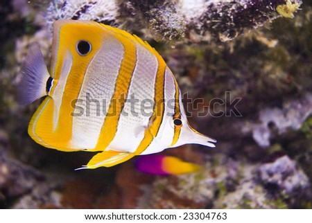 Beautiful sea fish on atoll - stock photo