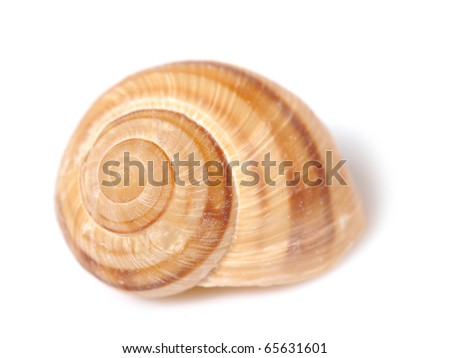 Beautiful sea shell. isolated on white background