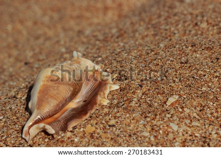 Beautiful sea shell on the sea shore on blurred/Seashell in the sand selected focus on the concept of tourism and recreation - stock photo
