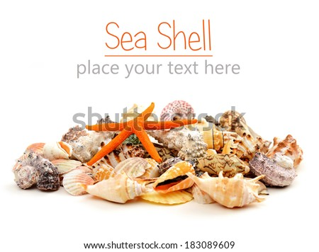 beautiful sea shells close-up on white background  - stock photo